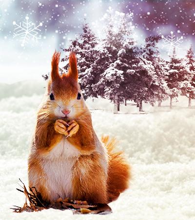 Miniatura magia de diciembre