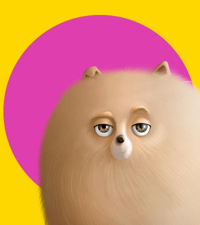 Pets para colorear - Villavicencio