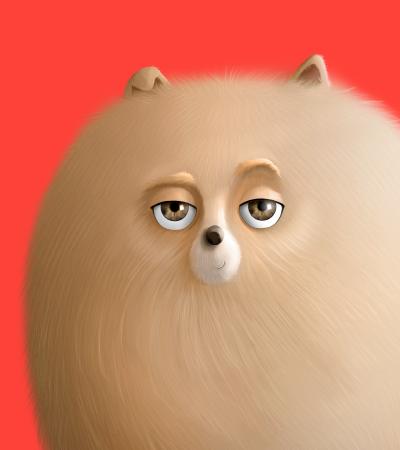 Cuidados para tu mascota - Caucasia